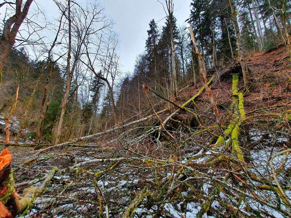 So wie hier in der Gauchachschlucht si...chlucht und ihren Nebenschluchten aus.  | Foto: Landratsamt Schwarzwald-Baar-Kreis