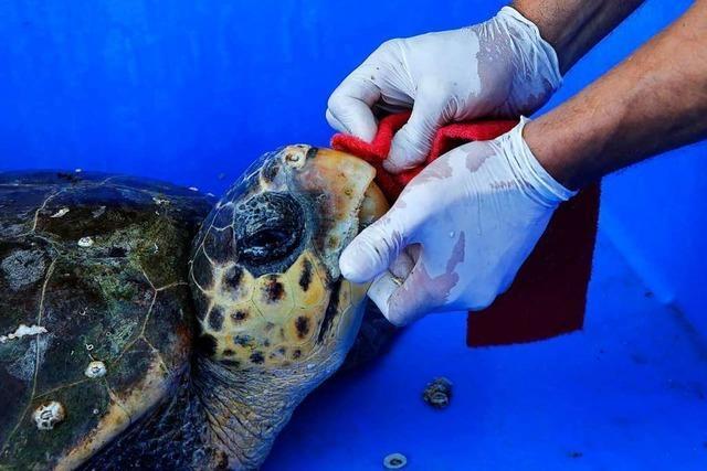 Ölpest vor Israels Küste bedroht die Tierwelt im Mittelmeer