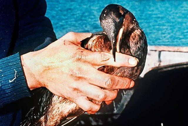Kann man Tieren nach einer Ölpest helfen?
