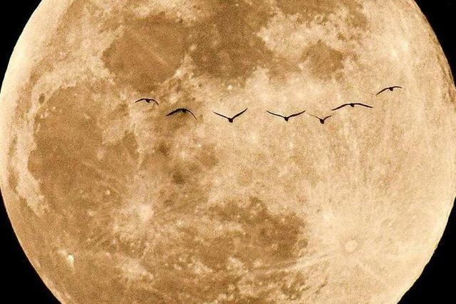 Zugvögel vor dem Vollmond bei Rheinfelden