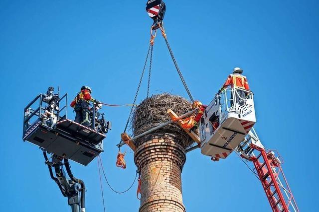 Wegen Absturzgefahr: Freiburger Feuerwehr trägt Storchennest auf 30 Meter hohem Kamin ab