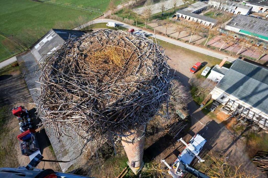 Nest mit schöner Aussicht, aber absturzgefährdet  | Foto: Stadt Freiburg / Mundenhof