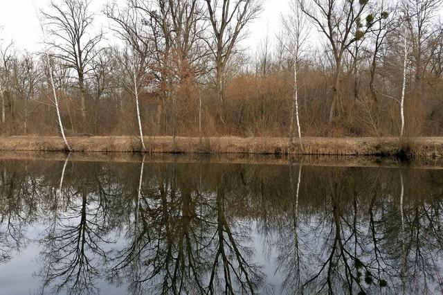 Wasserspiel im Rheinwald
