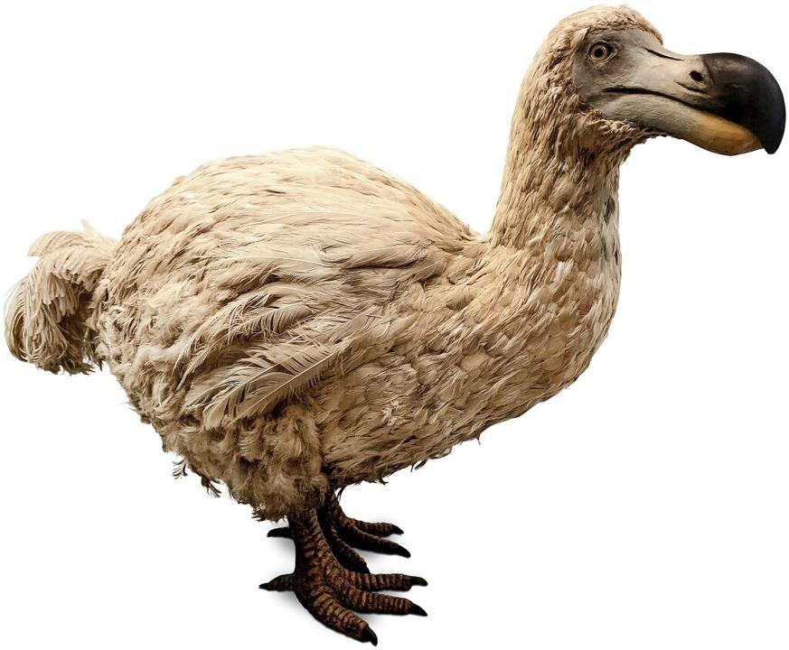 Der Dodo (oben) und der Höhlenbär (unt... mehr so verbreitet wie früher einmal.  | Foto: theartofpics  (stock.adobe.com)