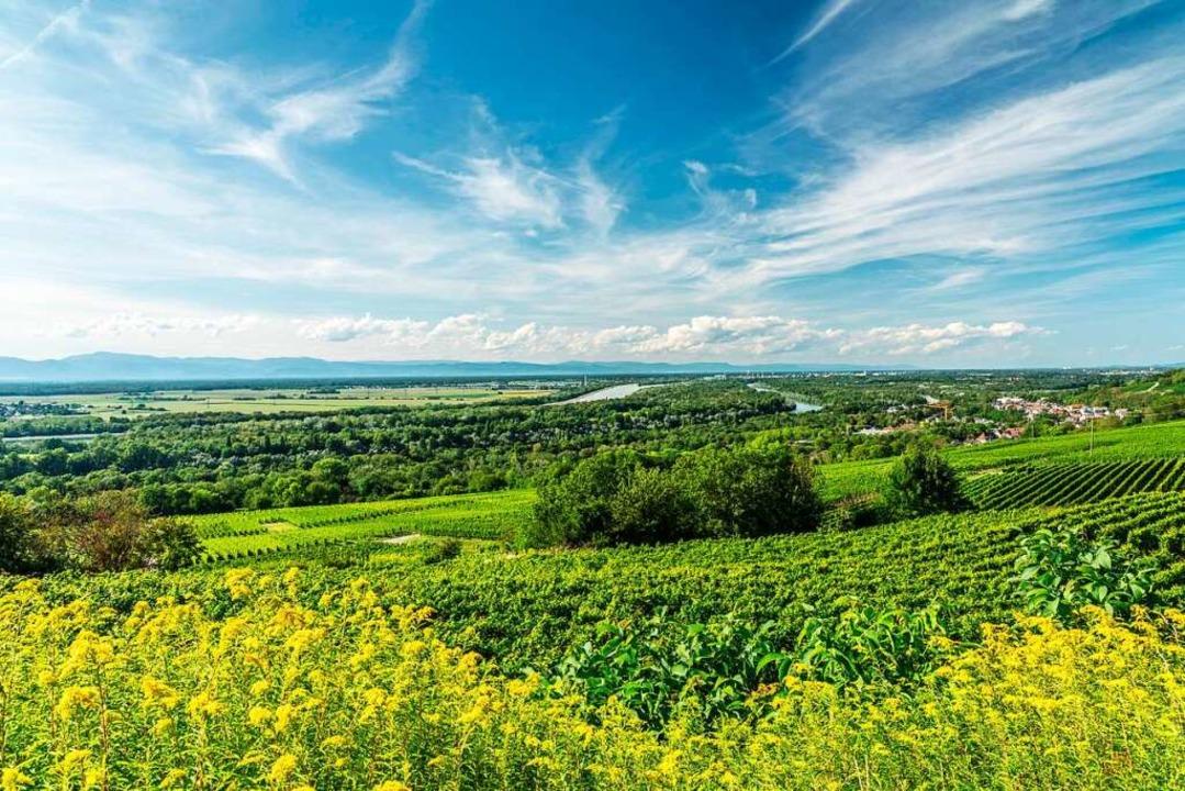 Die Vielseitigkeit mit Weinbau und Rhe...ter der Marke Südschwarzwald bewerben.  | Foto: spiegelhalter michael kontakt@sp