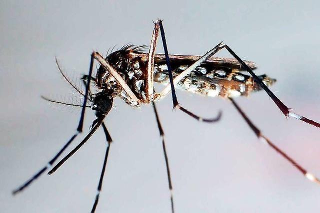 Grenazch-Wyhlen plant ein Monitoring für die Asiatische Tigermücke