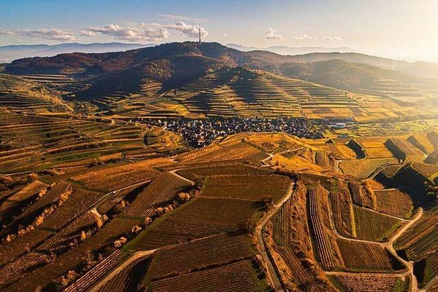 Kaiserstühler Weinbetriebe träumen von berühmten Markenwein