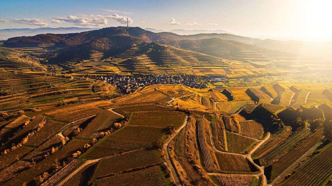 Alle Welt soll wissen: Ein Pino Magma ...ossenschaft für ihren Marken-Weißwein.  | Foto: Pino Magma