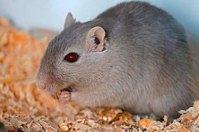 Polizei rettet in Kaiseraugst eine Mäusefamilie aus Grüncontainer