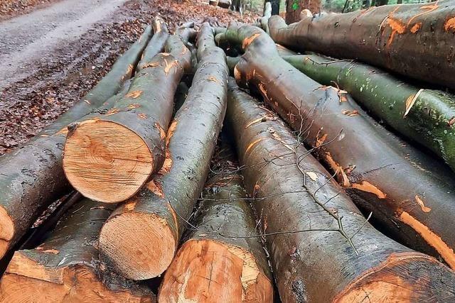 Friesenheimer können ihr Holz wohl im April aus dem Wald holen