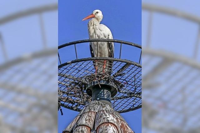 Der Storch ist zurück