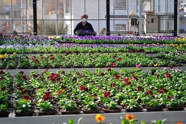 Blumenläden: Das Warten auf Kunden hat ein Ende