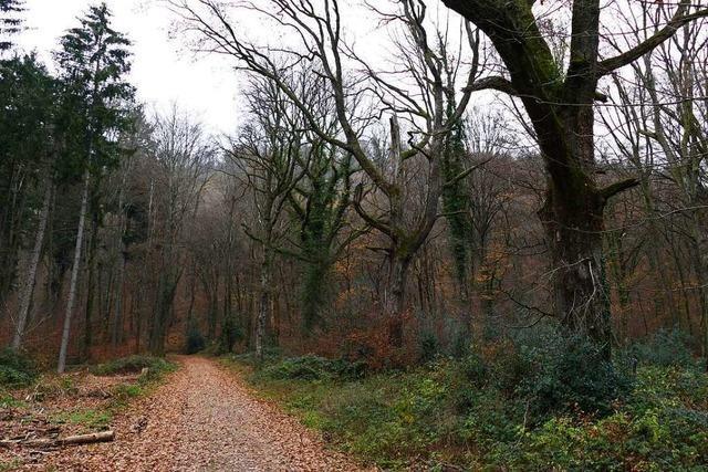 Bad Säckinger Forstbetrieb stellt Eigentümerziele für 2022 bis 2031 vor