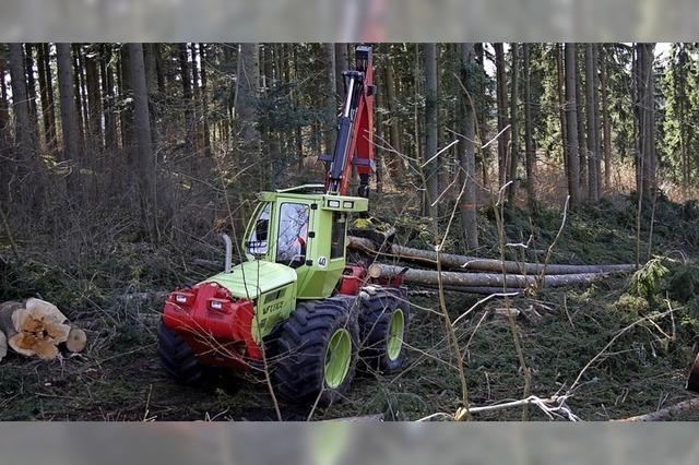 Der Wald soll bunter werden