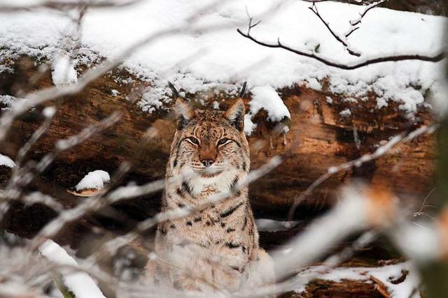 Diese 6 Arten sind im Hochschwarzwald besonders selten