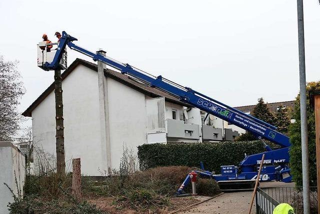 Verkehrssicherungspflicht: In der Park-Siedlung wurden Bäume gefällt