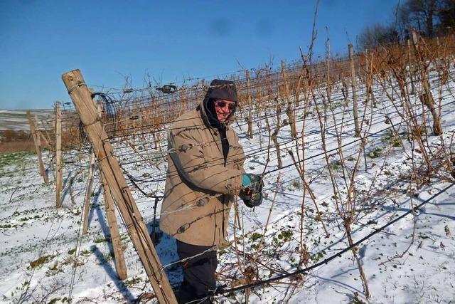 Freiburger Journalist arbeitet als Rebhelfer auf einem Weingut am Kaiserstuhl