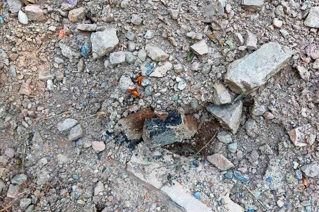Im Kleinen Wiesental gibt es Streit um angebliches Gift im Wald