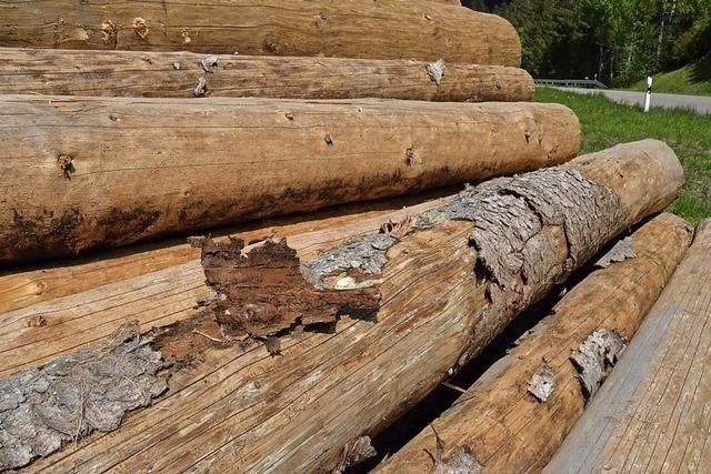 Käfer und Sturm prägen die Forstbilanz