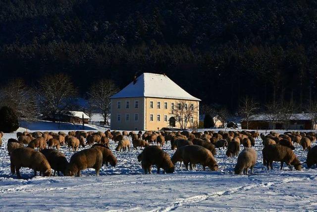 Winter im Dreisamtal beim Wasserschloss Bickenreute