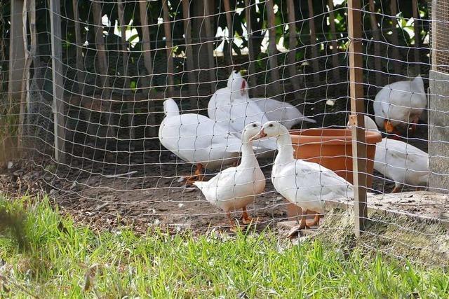 Tierhalter sieht Friedhofsruhe in Ihringen nicht gefährdet