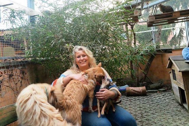 Wie sich beim Tierschutzverein Markgräflerland die Pandemie bemerkbar macht