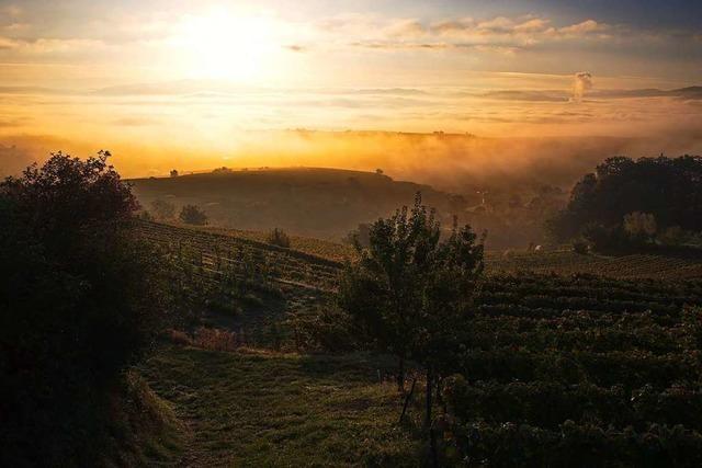Goldener Oktober in den Weinbergen bei Eichstetten