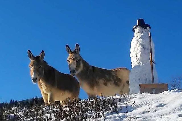 Esel mit Schneemann bei Mambach