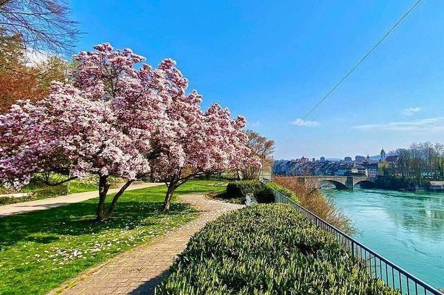 Wunderbare Frühlingsstimmung in Rheinfelden