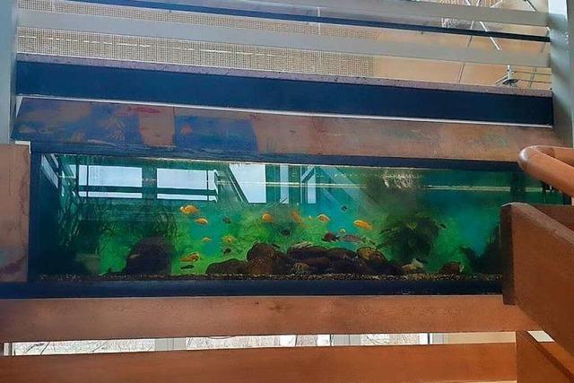 Spender gesucht, für den Erhalt des Aquariums an der Schule Istein