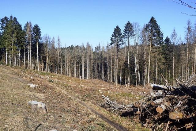 Die Nachfrage nach Holz steigt wieder
