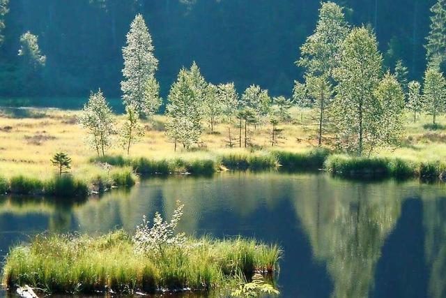 Der Natur auf der Spur im Schwarzwald