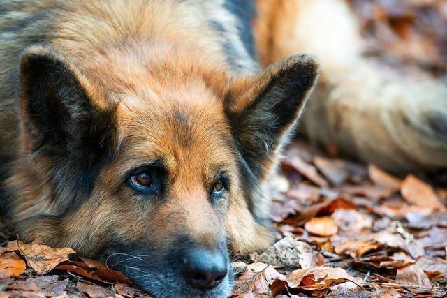 Hundehaltung wird in Kappel-Grafenhausen nicht teurer