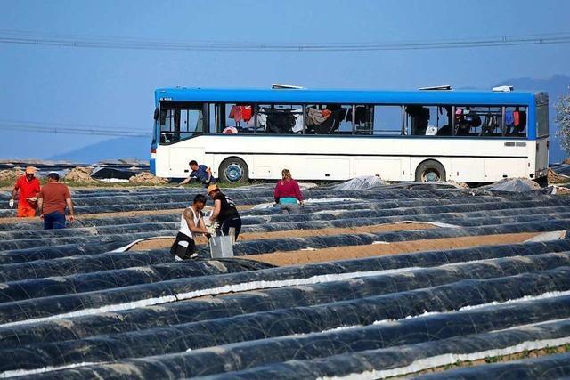 Südbadische Bauern fürchten Einreisestopps für Erntehelfer