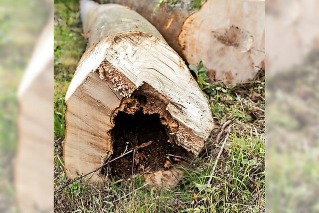 Wald leidet unter dem Klimawandel
