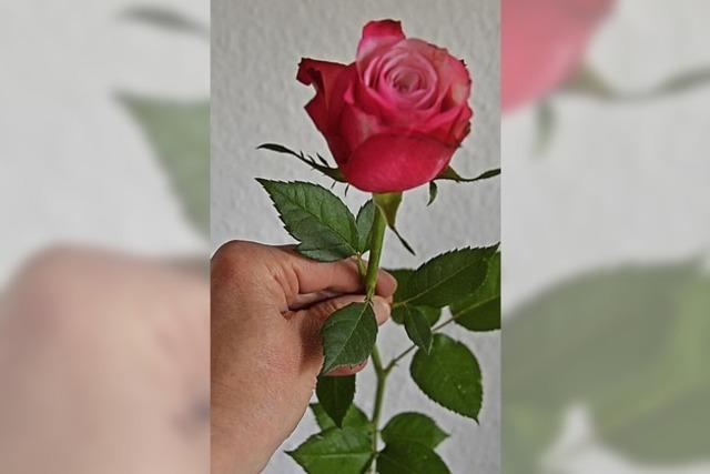 Eine Rose für die Frauen am Weltfrauentag