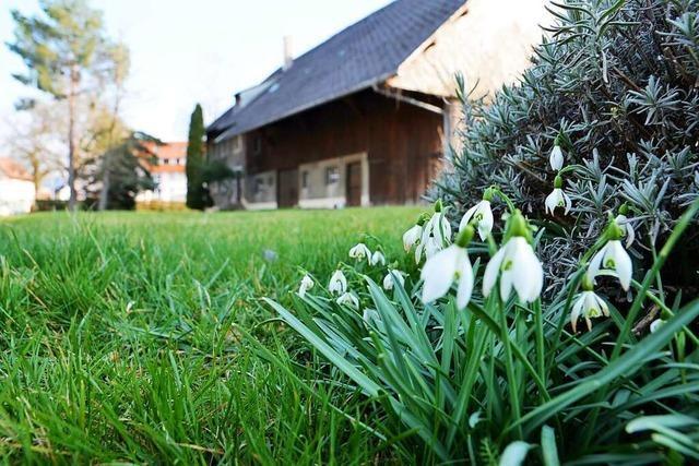 Dörflich bleiben oder dicht bauen? Kirchzartens Gemeinderat lehnt Bauprojekt in Zarten ab