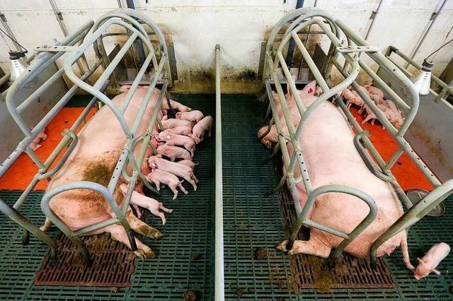 Turbokühe und Schredderküken: Echten Tierschutz gibt es nur auf dem Papier