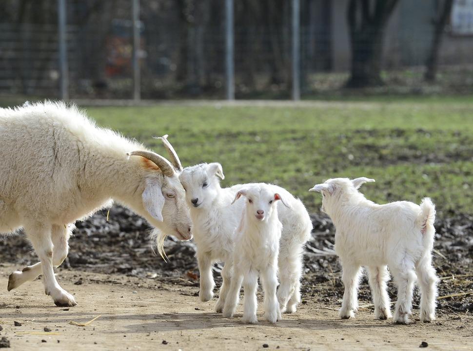 Derzeit gibt es viel Tiernachwuchs auf dem Mundenhof.  | Foto: Ingo Schneider