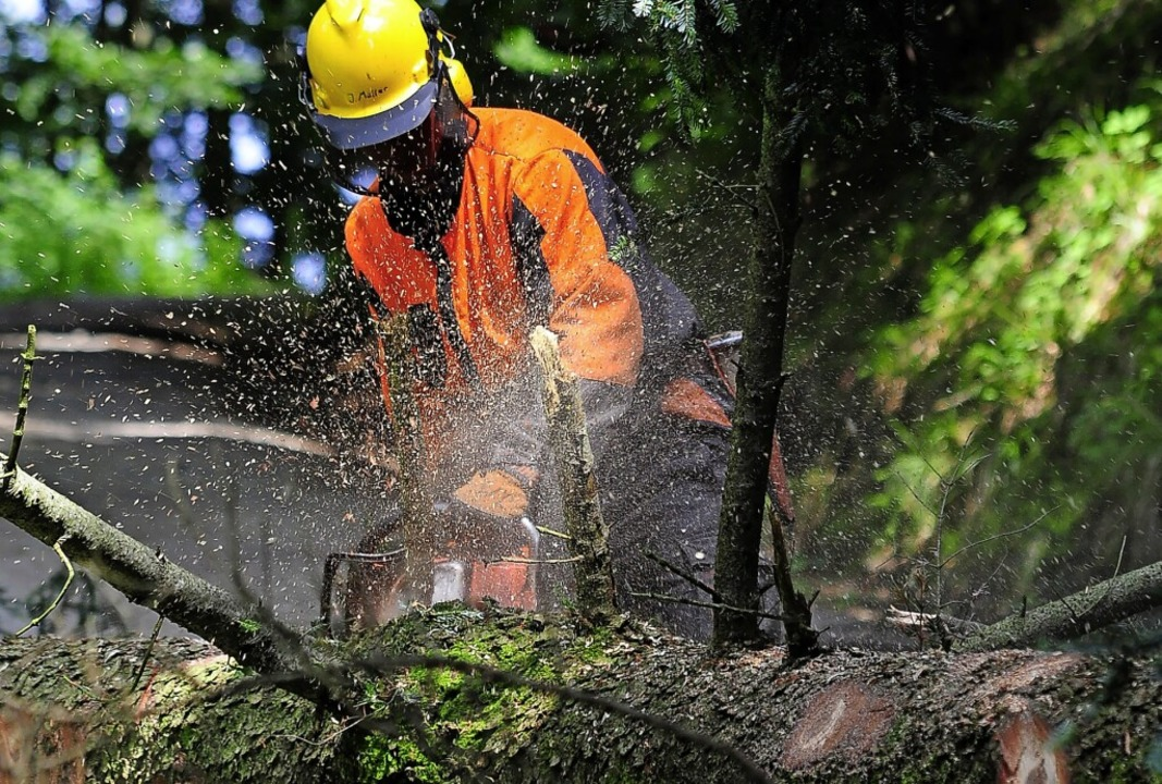 Die Forstarbeiter sollen Platz machen ...besser mit Trockenheit zurechtkommen.   | Foto: Thomas Kunz