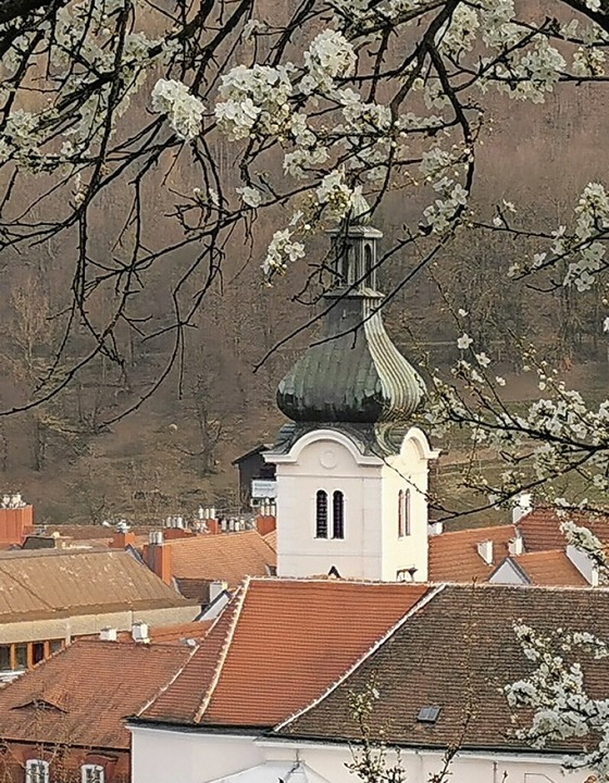 Die Pfarrkirche in Purkersdorf  | Foto: Elise Madl