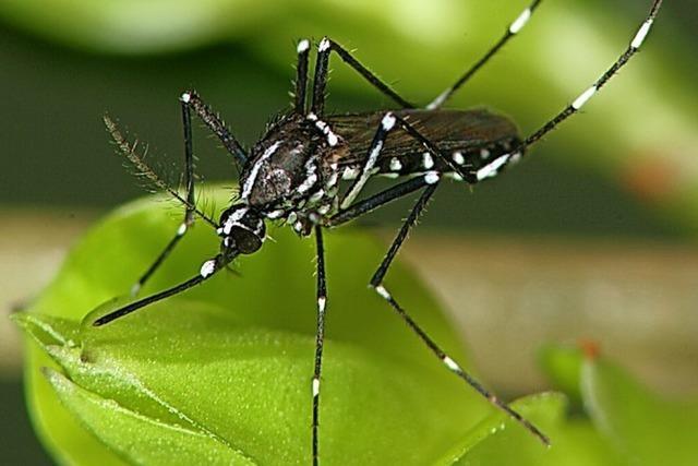 Helfer gesucht für Mückenjagd