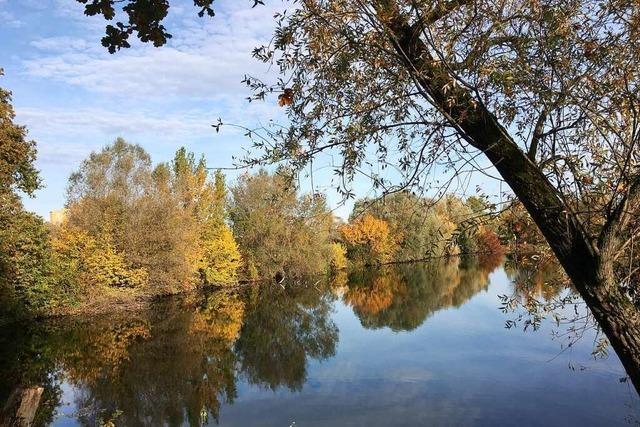 Der Eurodistriktrat befürwortet eine Rheinbrücke zwischen Schwanau und dem Elsass