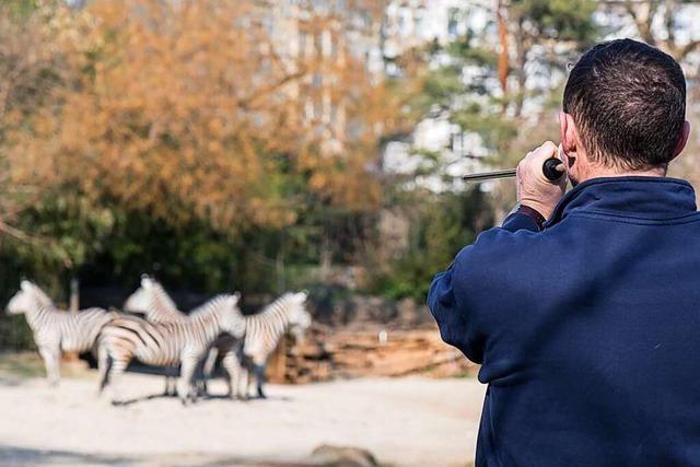 Im Basler Zoo werden die Tiere mit dem Blasrohr geimpft