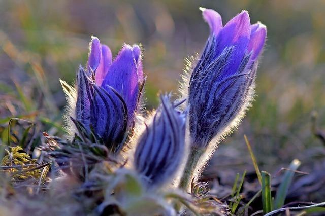 Beliebte Frühlingsboten