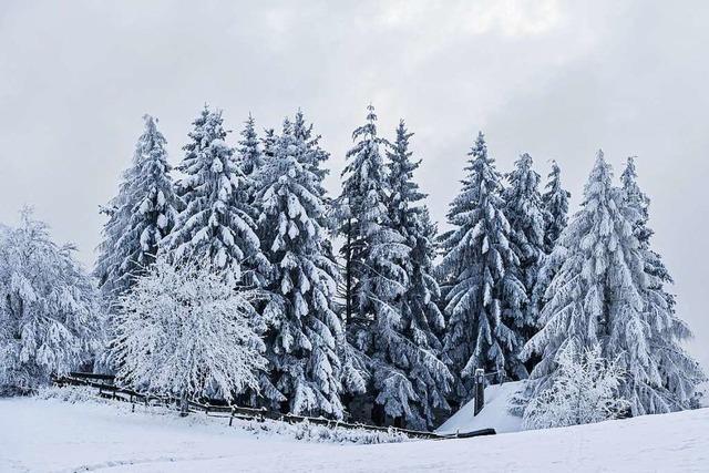 Der Winter kehrt zurück – bis ein Meter Neuschnee im Schwarzwald
