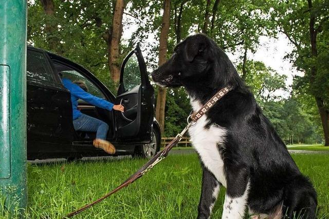 Mann schlägt mit Holzknüppel auf Hund ein