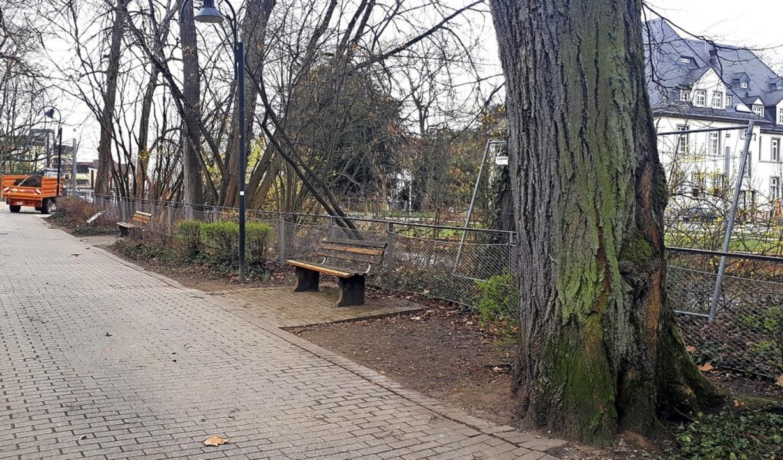 Durch Neupflanzungen sogenannter Krim-...ntlang im Zwingerpark ergänzt werden.     Foto: Barbara Puppe