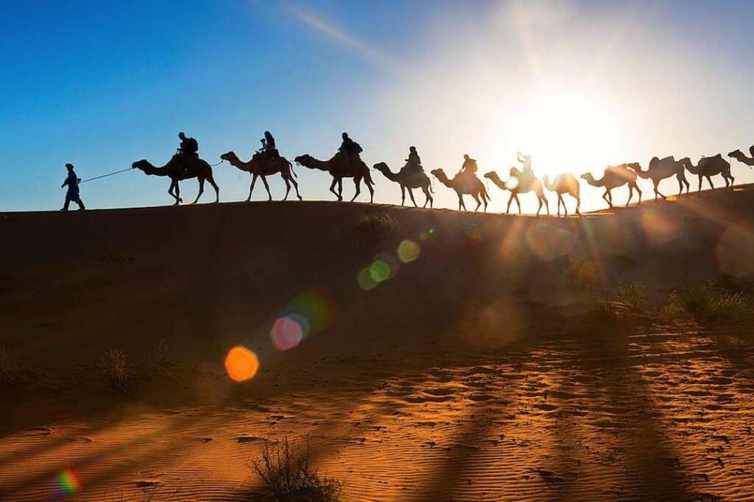 """Neben Menschen und Gütern reisten auch...fe"""" durch Länder und Kontinente.    Foto: Dan Mirica  (stock.adobe.com)"""