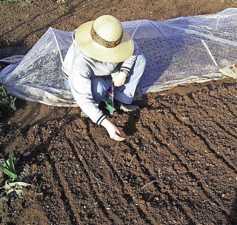 Wenn der Boden ausreichend abgetrockne...ntunnel oder auch im Freiland möglich.  | Foto: Volker Huber